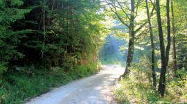 Weg zum Eibensee (ab Fuschl)
