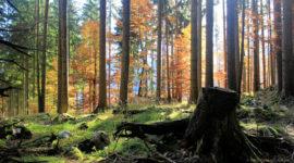 märchenhaft schöner Wald beim Aufstieg