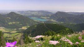 Am Gipfel des Faistenauer Schafberges