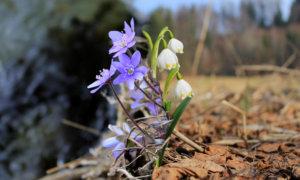 7 Frühlingsblumen die du kennen solltest