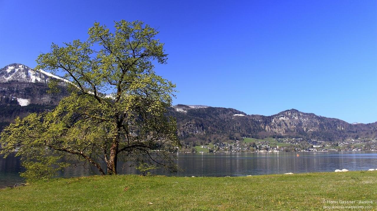 Waldstrandbad Fürberg - herrliche Bademöglichkeit im Sommer