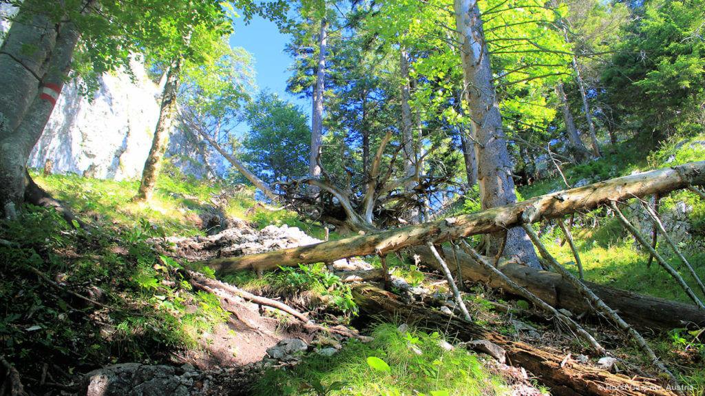 Lieblingsberge im Salzburger Land - kurz vor dem Sattel der Drachenwand