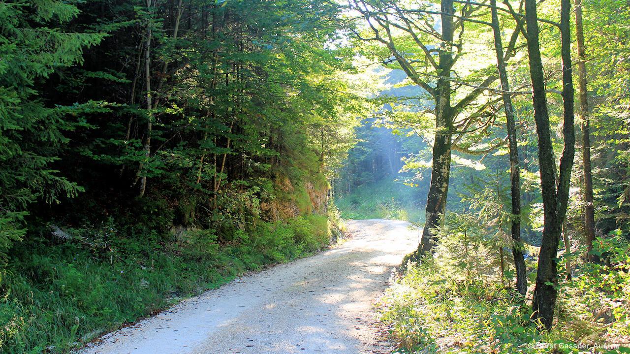 Weg zum Eibensee