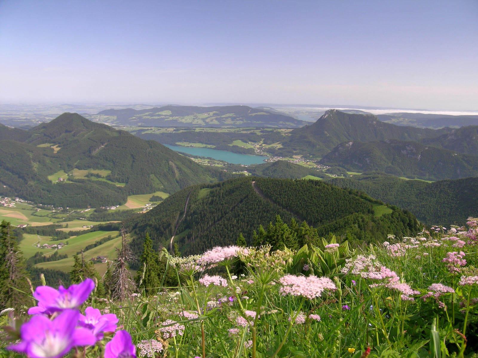 Faistenauer Schafberg / Loibersbacher Höhe (1559m bzw. 1456m)