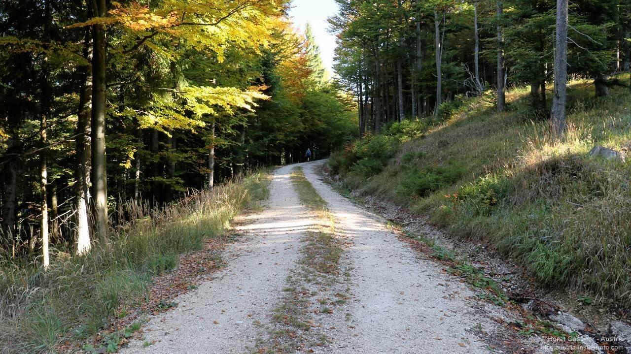 Flache Forststraße auf dem Weg zum Almkogel