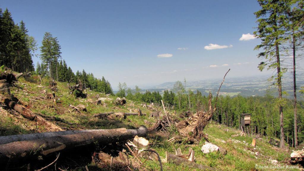Der Orkan Kyrill hat 2007 ganz Arbeit geleistet. Auf dem Weg zum Lidaun.