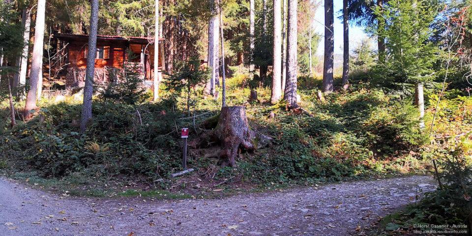 Schmittenstein - Bergalm, Waldweg Abzweiger