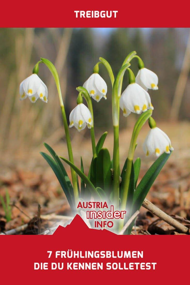 7 fr hlingsblumen die du kennen solltest austria insiderinfo. Black Bedroom Furniture Sets. Home Design Ideas
