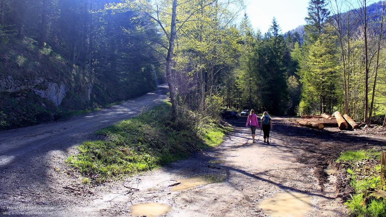Auf dem Weg zum Zwölferhorn - alter Almweg