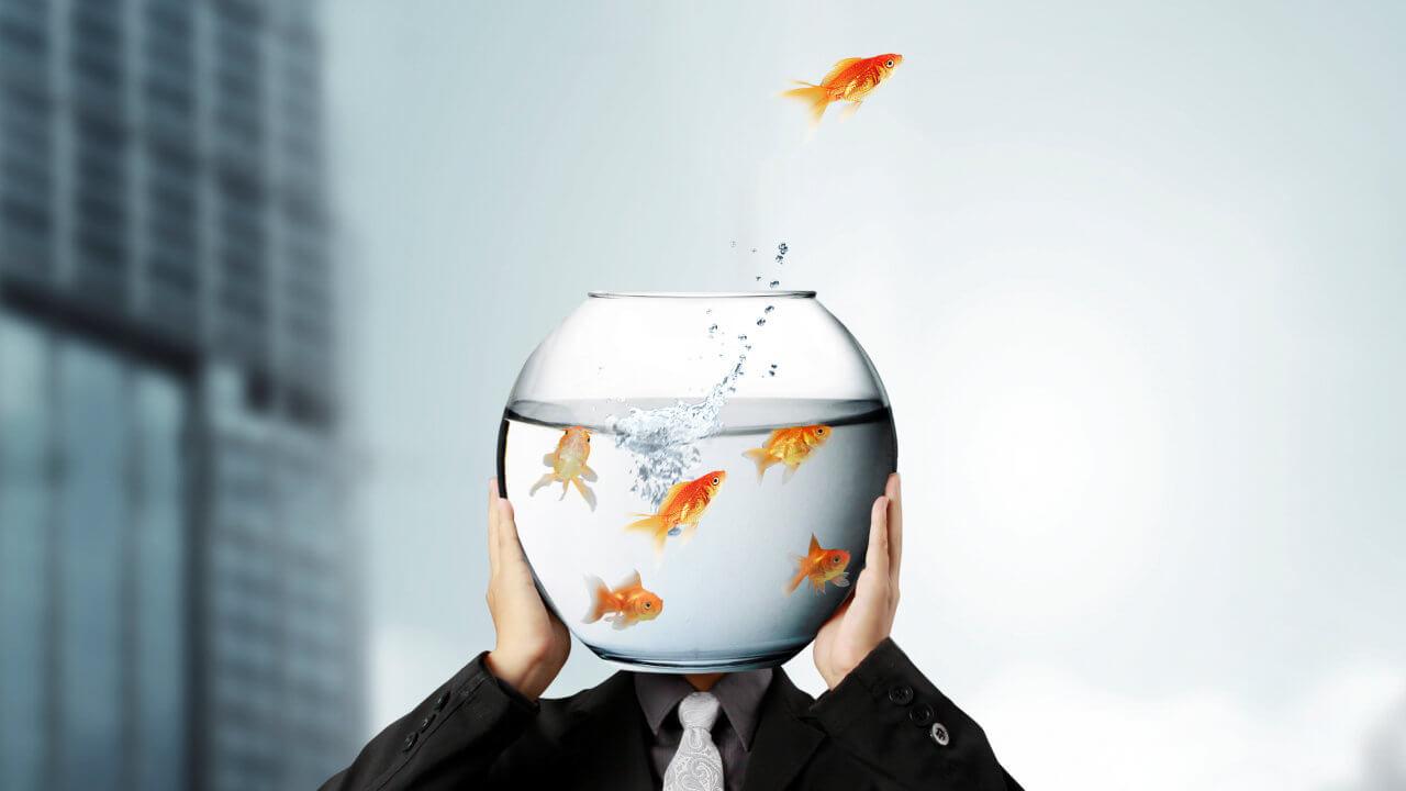 Digital Detox - ich will kein Goldfisch sein