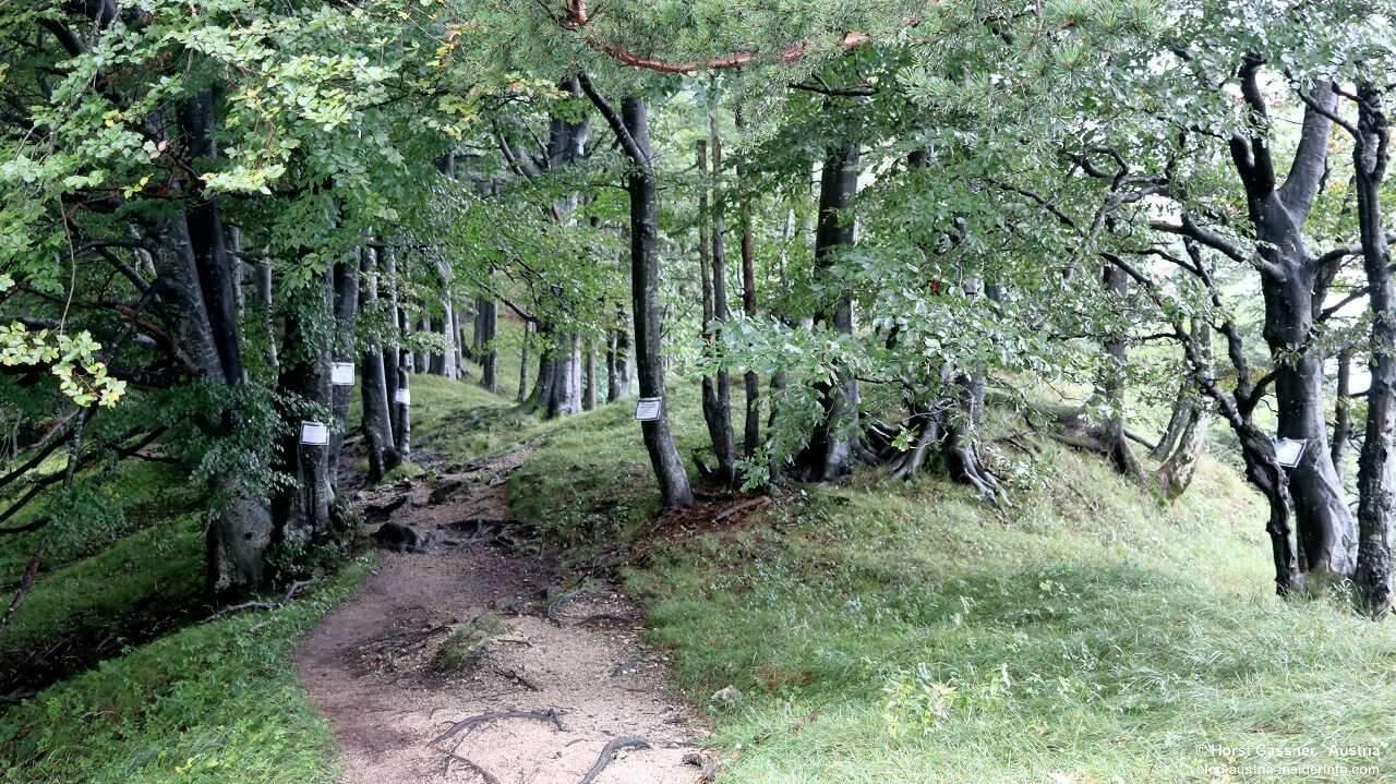 Nockstein - 380 kV Leitung, markierte Bäume