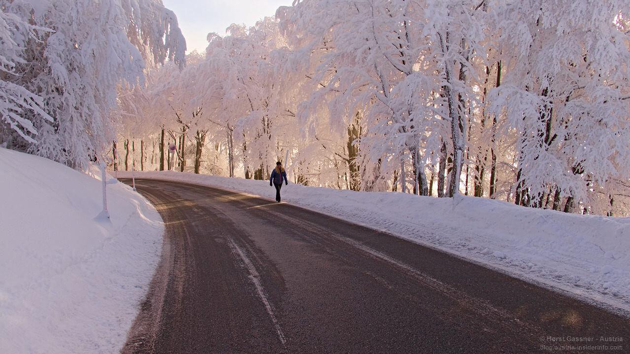 Gaisberg - Straße im Morgenlicht