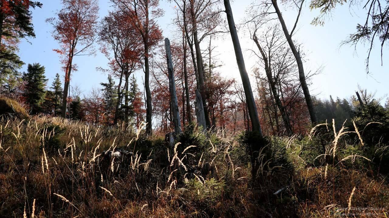 Im Wald im Gebiet um die Drachenwand