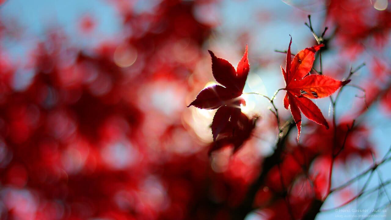 Ruhe suchen und finden - ein herbstliches Blatt Gegenlicht