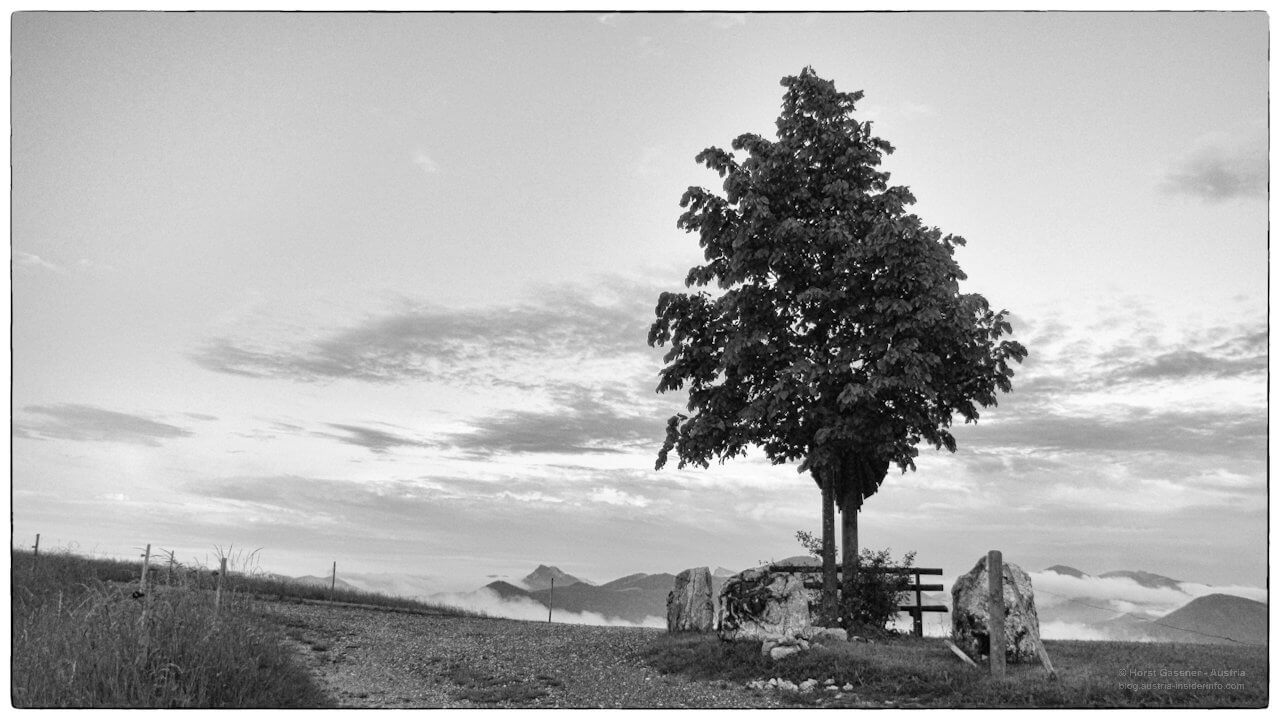 Der markante Baum mit dem Marterl und Bankerl