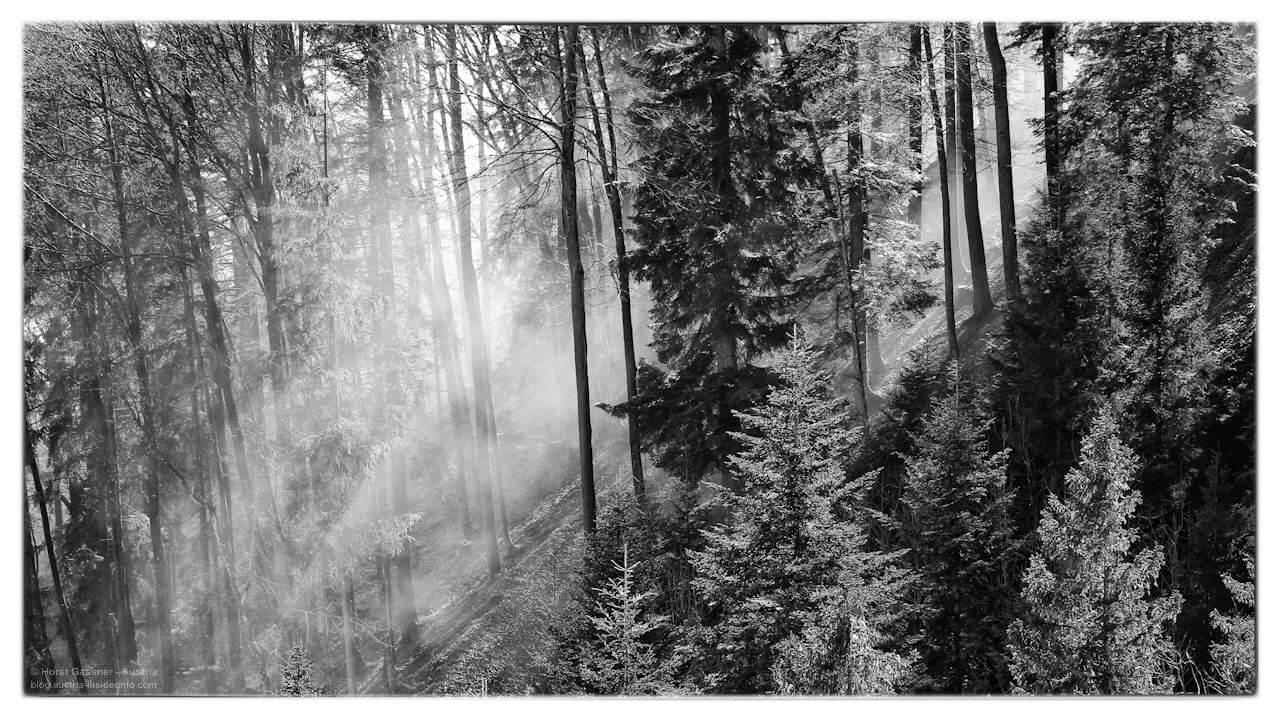 Herrliche Morgenstimmung im Wald