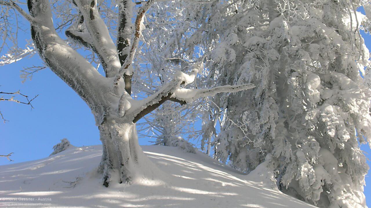 Herrlich verschneite Winterlandschaft am Nockstein