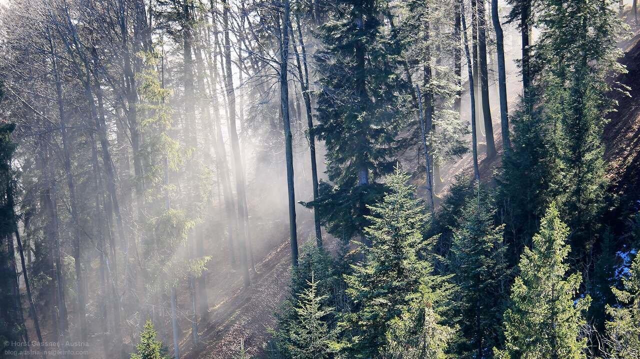 Wegefreiheit in Österreich - Waldgebiet