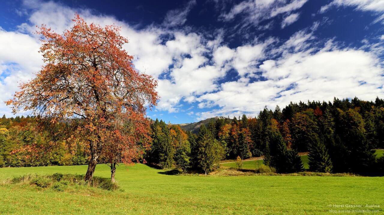 Baum, Himmel, Wiese - Rot, Blau, Grün
