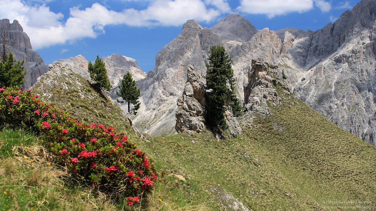 Im Rosengarten, Südtirol