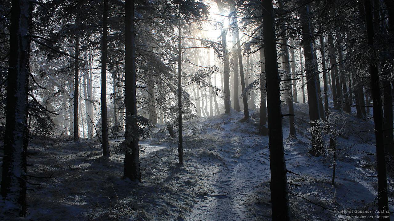Nockstein - winterlicher Wald im Gegenlicht
