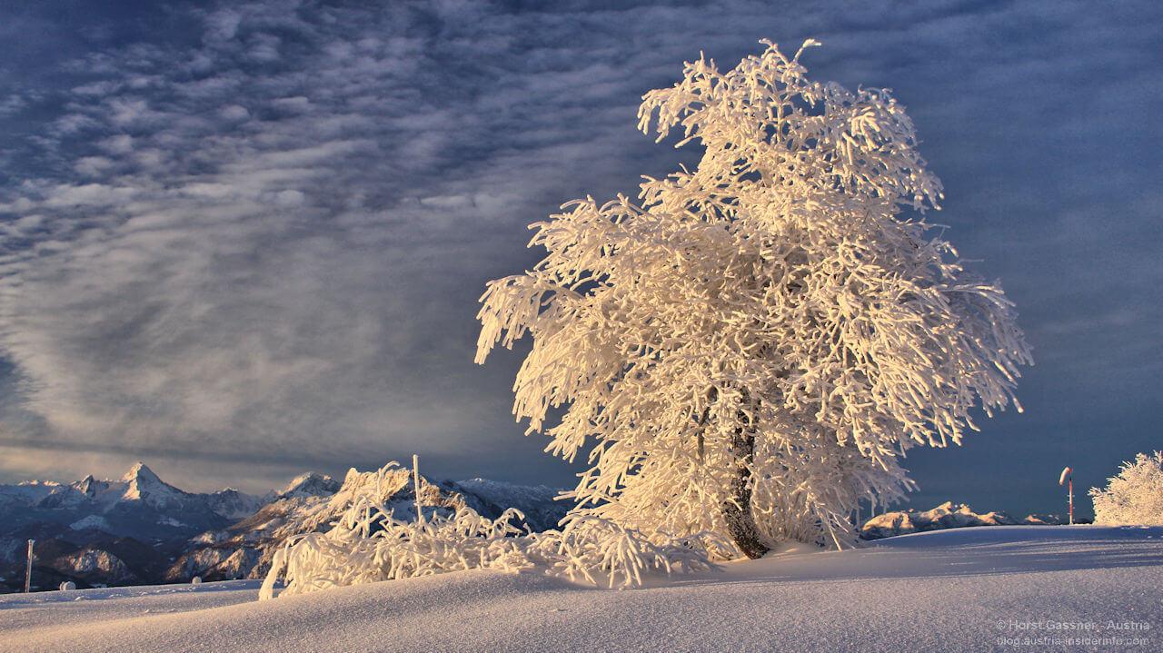 Winter (tr|b) aum