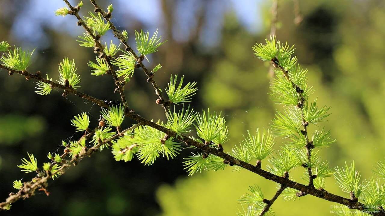 Was bedeutet Nachhaltigkeit? Zweig eines Baumes.
