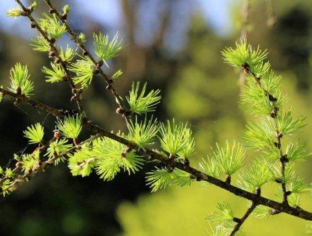 10 Bäume die du kennen solltest inkl. Cheat Sheet