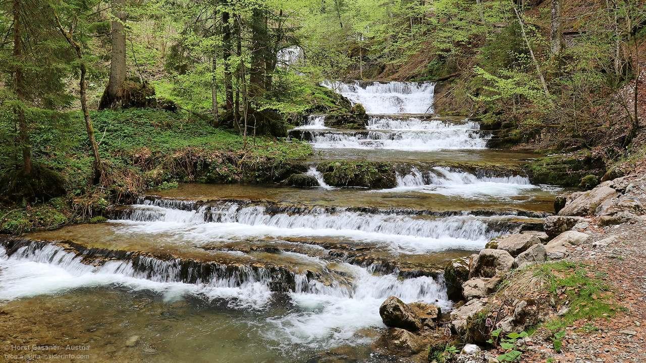 Wald Wasser Zauberweg in Hintersee