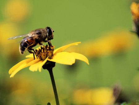 Massives Insektensterben bedroht unsere Zukunft