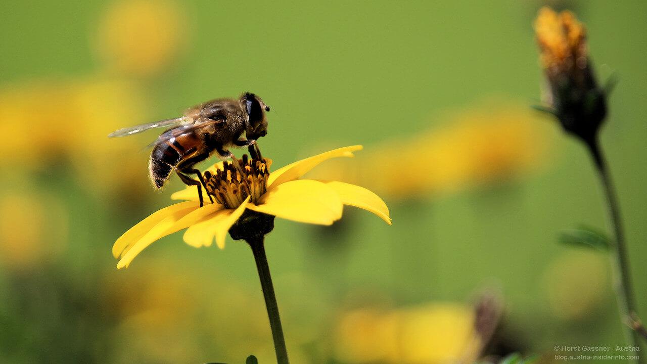 Massives Insektensterben bedroht unserer Zukunft