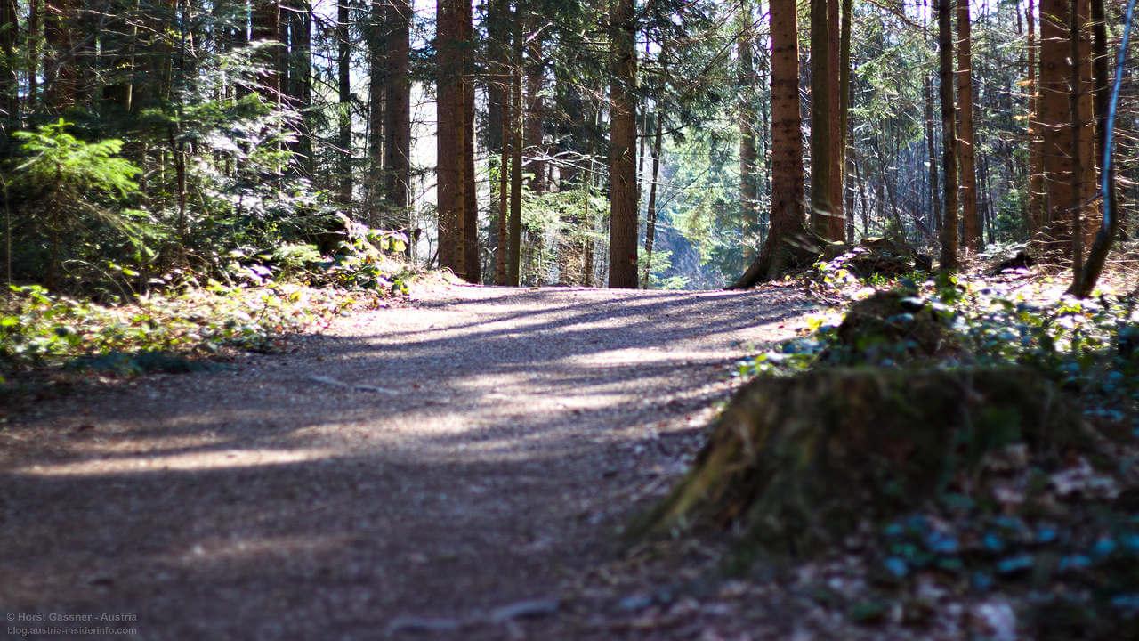 Fuschlsee Seeweg - Im Wald
