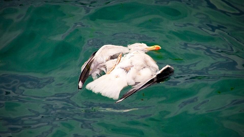 Von Öl verklebter Vogel