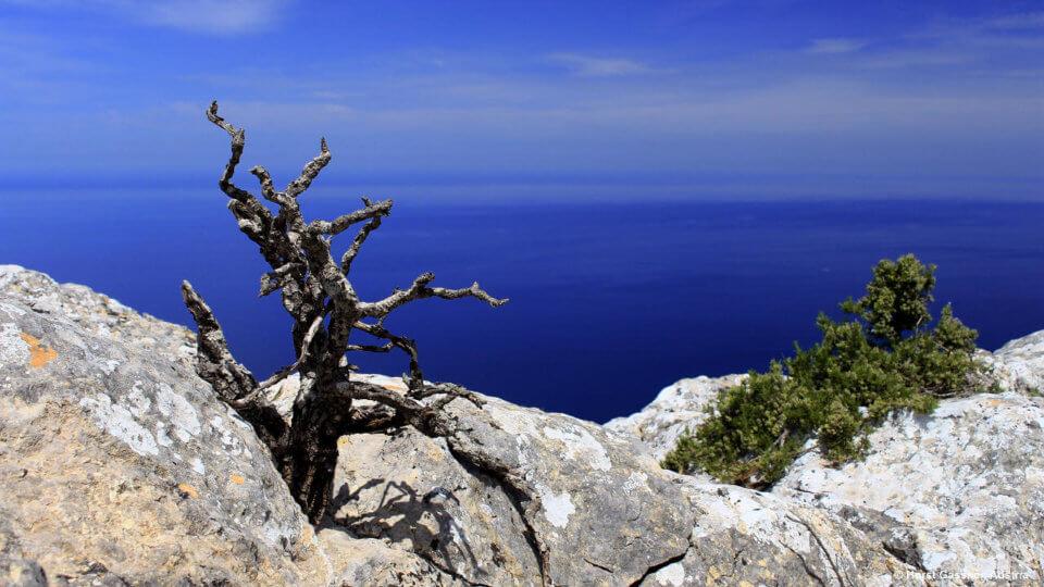 Wandern auf Mallorca - Meer und Berge
