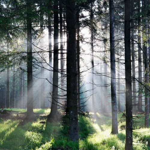 Waldzauber auf dem Weg zur Drachenwand