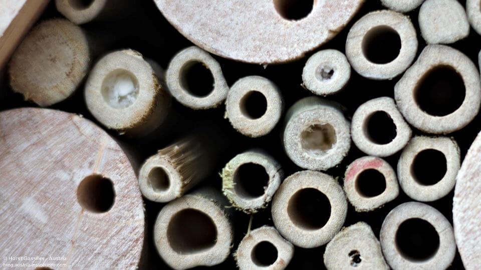 Nisthilfe für Wildbienen - Mängel / Fehler