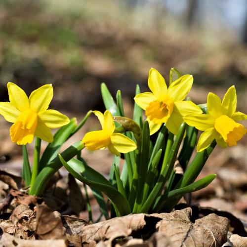 Blume mit gelber Blüte