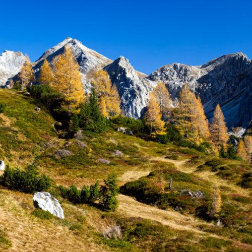 Herbstwald im Gebirge