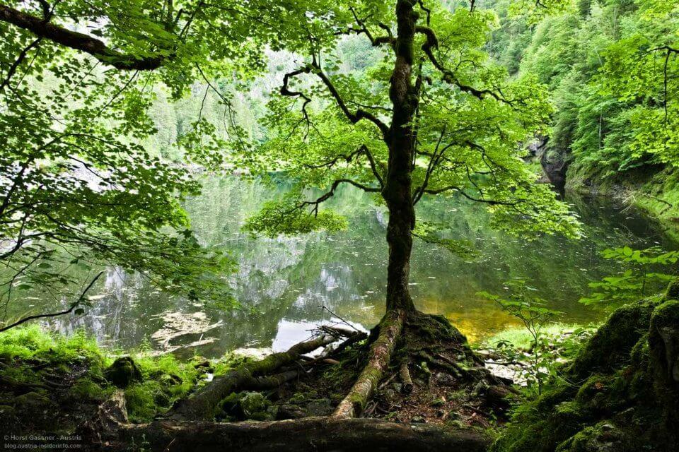 Idyllischer See im Wald - der Kammersee