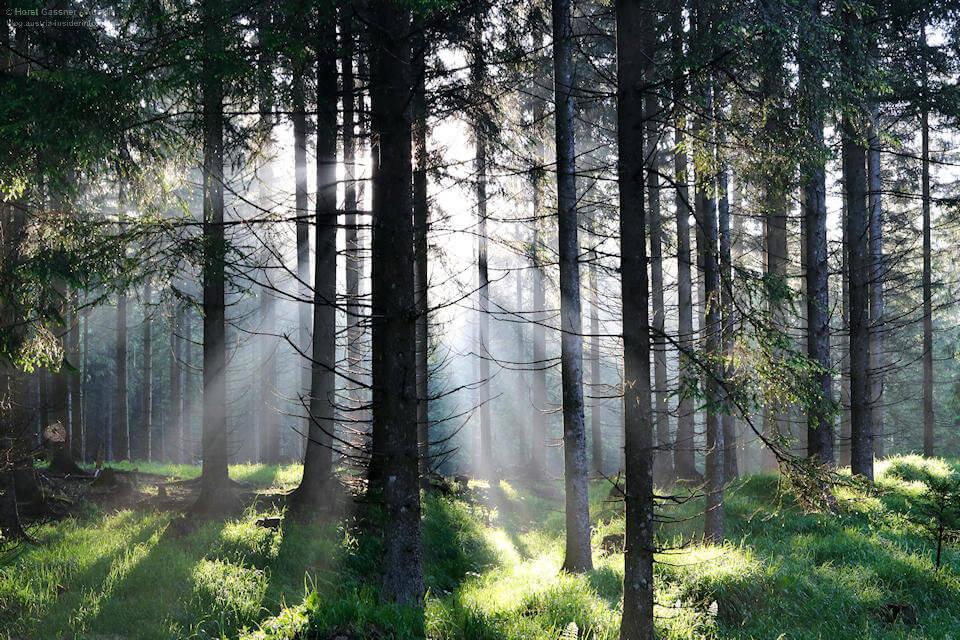 Waldzauber am Weg zur Drachenwand